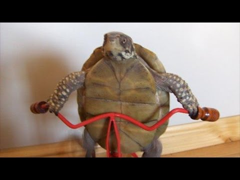 Turtle riding bike